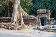 Το δέντρο Banyan στην καταστροφή Angkor Wat, Siem συγκεντρώνει, Καμπότζη Στοκ Φωτογραφία
