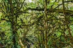 Το δέντρο yew-και-πυξαριού στοκ φωτογραφία με δικαίωμα ελεύθερης χρήσης