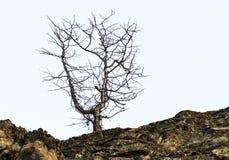 Το δέντρο Zen Στοκ Εικόνες