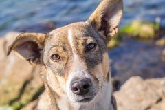 Το έξυπνο σκυλί κοιτάζει Στοκ εικόνες με δικαίωμα ελεύθερης χρήσης