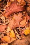 το έδαφος ημέρας φθινοπώρου αφήνει ηλιόλουστος Στοκ φωτογραφία με δικαίωμα ελεύθερης χρήσης