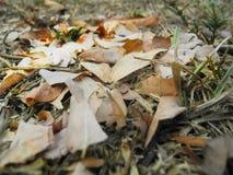 το έδαφος ημέρας φθινοπώρου αφήνει ηλιόλουστος Στοκ Εικόνες