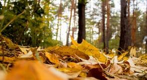 το έδαφος ημέρας φθινοπώρου αφήνει ηλιόλουστος Στοκ εικόνες με δικαίωμα ελεύθερης χρήσης