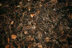 Το έδαφος καλύπτεται στις βελόνες, τους κώνους και τα φύλλα πεύκων σύσταση στοιχείων σχεδίου φθινοπώρου Στοκ φωτογραφίες με δικαίωμα ελεύθερης χρήσης