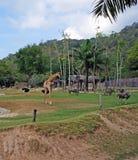 Το έδαφος του ζωολογικού κήπου με giraffe και τα ζώα Στοκ εικόνα με δικαίωμα ελεύθερης χρήσης