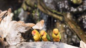 Το λίγο macaw κοιμάται Στοκ Εικόνες