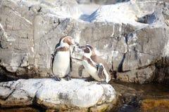 Το λίγο penguin Στοκ φωτογραφίες με δικαίωμα ελεύθερης χρήσης