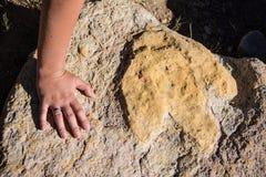 Το ίχνος δεινοσαύρων συγκρίνει με ένα χέρι Στοκ Εικόνες
