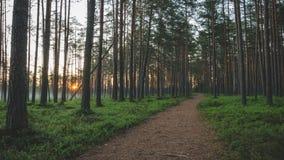 Το ίχνος πρωινού στο δάσος πεύκων Στοκ φωτογραφία με δικαίωμα ελεύθερης χρήσης