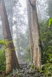 Το ίχνος Kumano Kodo, ένα ιερό ίχνος σε Nachi, Ιαπωνία στοκ εικόνα με δικαίωμα ελεύθερης χρήσης