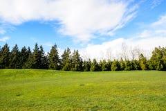 Πράσινα δέντρα στο πάρκο Στοκ φωτογραφίες με δικαίωμα ελεύθερης χρήσης