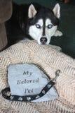Το αγαπημένο μνημείο της Pet μου στο κρεβάτι σκυλιών στοκ εικόνα