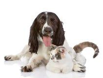 Το αγγλικές σκυλί και η γάτα σπανιέλ κόκερ βρίσκονται από κοινού Στοκ φωτογραφία με δικαίωμα ελεύθερης χρήσης