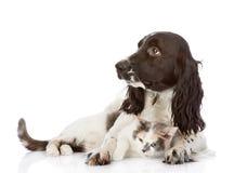 Το αγγλικές σκυλί και η γάτα σπανιέλ κόκερ βρίσκονται από κοινού. Στοκ φωτογραφία με δικαίωμα ελεύθερης χρήσης