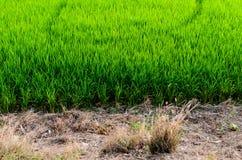 Το αγρόκτημα ρυζιού Στοκ Εικόνα