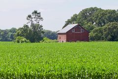 Το αγρόκτημα Στοκ Εικόνα