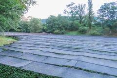 Το αγρόκτημα Daio Wasabi είναι ένα από τα μεγαλύτερα αγροκτήματα wasabi της Ιαπωνίας ` s μέσα στοκ εικόνες