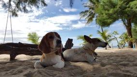Το λαγωνικό και ο Jack Russel κάθονται στην άμμο Στοκ φωτογραφίες με δικαίωμα ελεύθερης χρήσης