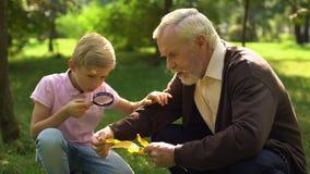 Το αγόρι εξετάζει το φύλλο μέσω της ενίσχυσης - γυαλί, granddad βοήθειες για να εξερευνήσει τον κόσμο απόθεμα βίντεο