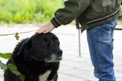 Το αγόρι κτυπά το κεφάλι ενός μαύρου περιπλανώμενου σκυλιού, mongrel με το sa Στοκ φωτογραφίες με δικαίωμα ελεύθερης χρήσης