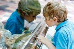 Το αγόρι παιδάκι θαυμάζει το δηλητηριώδες πράσινο φίδι στο terrarium στοκ εικόνα