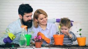 Το αγόρι που φυτεύει τις τουλίπες με τους γονείς του στα χρωματισμένα δοχεία κηπουρική έννοιας Οι γονείς είναι ευχαριστημένοι από απόθεμα βίντεο