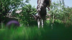 Το αγόρι ρίχνει τα τρόφιμα σκυλιών και τη ζωική σύλληψή του αυτό απόθεμα βίντεο