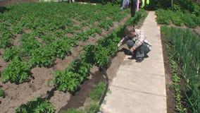 Το αγόρι στο πότισμα κήπων ποτίζει τους νέους βλαστούς των πατατών φιλμ μικρού μήκους