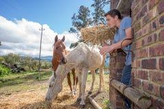 Το αγόρι ταΐζει τα άλογα Στοκ εικόνα με δικαίωμα ελεύθερης χρήσης