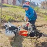 Το αγόρι ταΐζει τις πάπιες Άνοιξη, παιδί σε ένα αγρόκτημα παπιών στοκ εικόνα με δικαίωμα ελεύθερης χρήσης