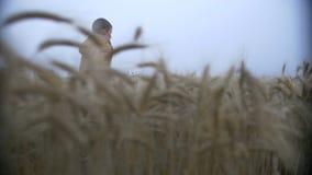 Το αγόρι τρέχει σε έναν χρυσό τομέα στην αυγή, υδρονέφωση σε έναν τομέα σίτου απόθεμα βίντεο