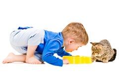 Το αγόρι τρώει ένα κύπελλο της γάτας στοκ εικόνες