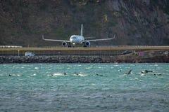 Το αεροπλάνο απογειώνεται στον αερολιμένα του Ουέλλινγκτον δίπλα στα δελφίνια στον κόλπο Στοκ Φωτογραφίες
