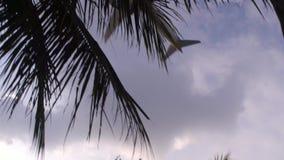 Το αεροπλάνο που προσγειώνεται πέρα από τα δέντρα απόθεμα βίντεο