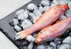 Το ακατέργαστο ψάρι, κόκκινα ψάρια κεφάλων σε έναν πάγο κυβίζει Στοκ Εικόνες