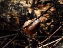 Το ακραίο σαλιγκάρι στοκ φωτογραφίες