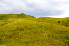 Το αλπικό τοπίο λιβαδιών στο οροπέδιο Qinghai Θιβέτ Στοκ Φωτογραφία