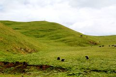 Το αλπικό τοπίο λιβαδιών στο οροπέδιο Qinghai Θιβέτ Στοκ φωτογραφία με δικαίωμα ελεύθερης χρήσης