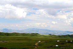 Το αλπικό τοπίο λιβαδιών στο οροπέδιο Qinghai Θιβέτ Στοκ Εικόνα
