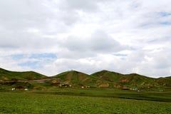 Το αλπικό τοπίο λιβαδιών στο οροπέδιο Qinghai Θιβέτ Στοκ εικόνες με δικαίωμα ελεύθερης χρήσης