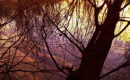 Το αλσύλλιο του δάσους και της ομίχλης φωτίζεται από τον ήλιο, φωτεινοί ήλιοι Στοκ Εικόνες
