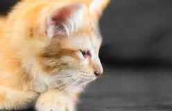 Το αμφισβητήσιμο oragne λίγη γάτα γατακιών βρίσκεται στην ξύλινη κινηματογράφηση σε πρώτο πλάνο s πατωμάτων Στοκ Εικόνα