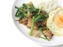 Το ανακατώνω-τηγανισμένο τριζάτο χοιρινό κρέας με το Kale και το ταϊλανδικό ύφος τηγάνισαν το αυγό στο άσπρο πιάτο στο άσπρο υπόβ στοκ φωτογραφία