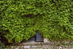 Το αναρριχητικό φυτό της Βιρτζίνια έχει πάρει την κατοχή του ιστορικού κτηρίου Στοκ φωτογραφία με δικαίωμα ελεύθερης χρήσης