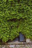 Το αναρριχητικό φυτό της Βιρτζίνια έχει πάρει την κατοχή του ιστορικού κτηρίου Στοκ φωτογραφίες με δικαίωμα ελεύθερης χρήσης