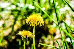 το ανθίζοντας πεδίο ημέρας το αγροτικό καλοκαίρι της Sally λουλουδιών Στοκ Φωτογραφίες