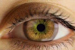 Το ανθρώπινο θηλυκό μάτι είναι ανοικτό καφέ η στενή εικόνα ματιών επίδρασης υπολογιστών τροποποίησε ειδικό Στοκ Εικόνες
