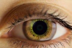 Το ανθρώπινο θηλυκό μάτι είναι ανοικτό καφέ η στενή εικόνα ματιών επίδρασης υπολογιστών τροποποίησε ειδικό Στοκ εικόνα με δικαίωμα ελεύθερης χρήσης