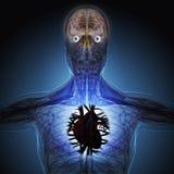 Το ανθρώπινο σώμα από τις ακτίνες X στο μπλε υπόβαθρο Στοκ Φωτογραφίες