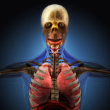 Το ανθρώπινο σώμα από τις ακτίνες X στο μπλε υπόβαθρο Στοκ Εικόνες